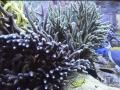 triton-reef-hydrowizard-4