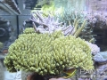 triton-reef-hydrowizard-5