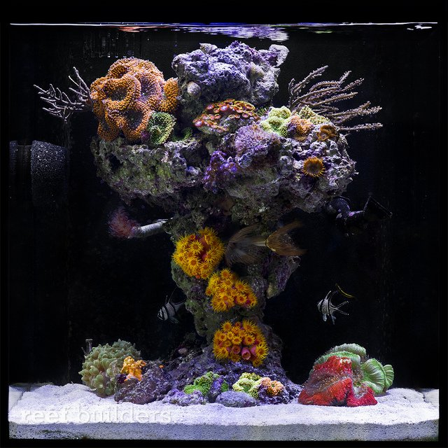 What's the best nano aquascape you've ever seen - Page 15 ...