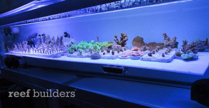 sensor mag probe holder vertex aquaristik