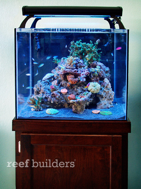 starfire nano tanks from wilco design are beautiful little boxes reef builders the reef and. Black Bedroom Furniture Sets. Home Design Ideas
