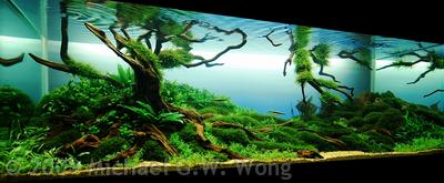 Aga Aquascaping Contest Delivers Stunning Freshwater Views Reef Builders The Reef And Saltwater Aquarium Blog
