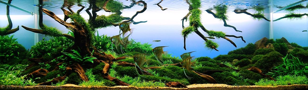 AGA aquascaping contest delivers stunning freshwater views ...