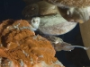 cuttlefish-mating-2