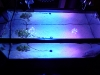 ledio-led-spotlight-reef-4