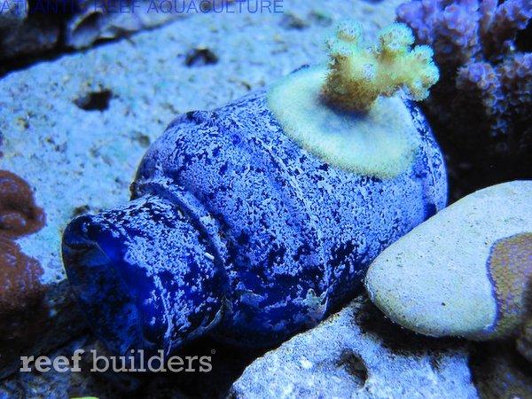 live-bottles-baltimore-blue-glass-14