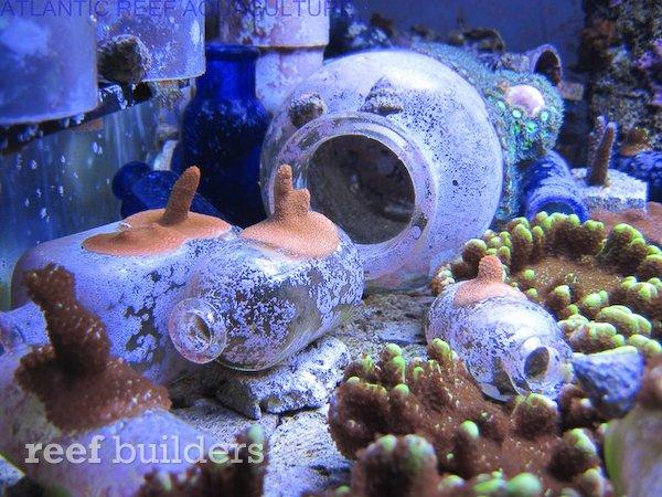 live-bottles-baltimore-blue-glass-3