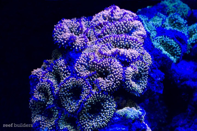Uv Aquarium Light