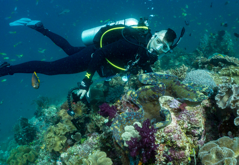 Diving next to a Tridacna gigas clam in Raja Ampat Indonesia