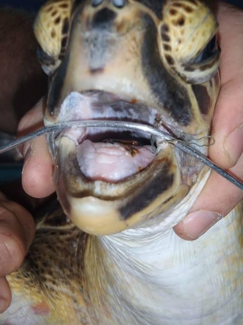 Sea-trutle-hooks
