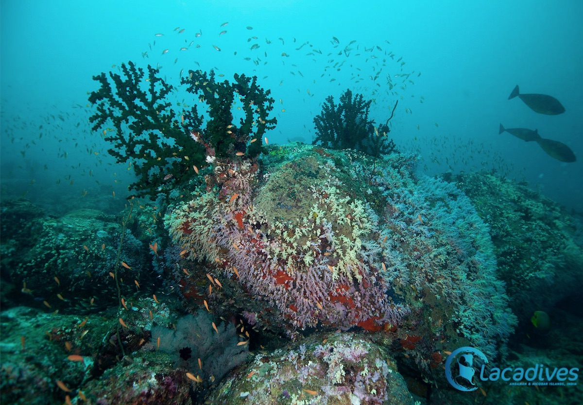 Lacadives-Andaman-Sea