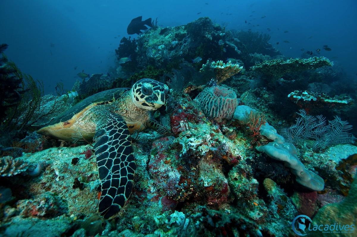 Sea-Turtle-Andaman-Islands
