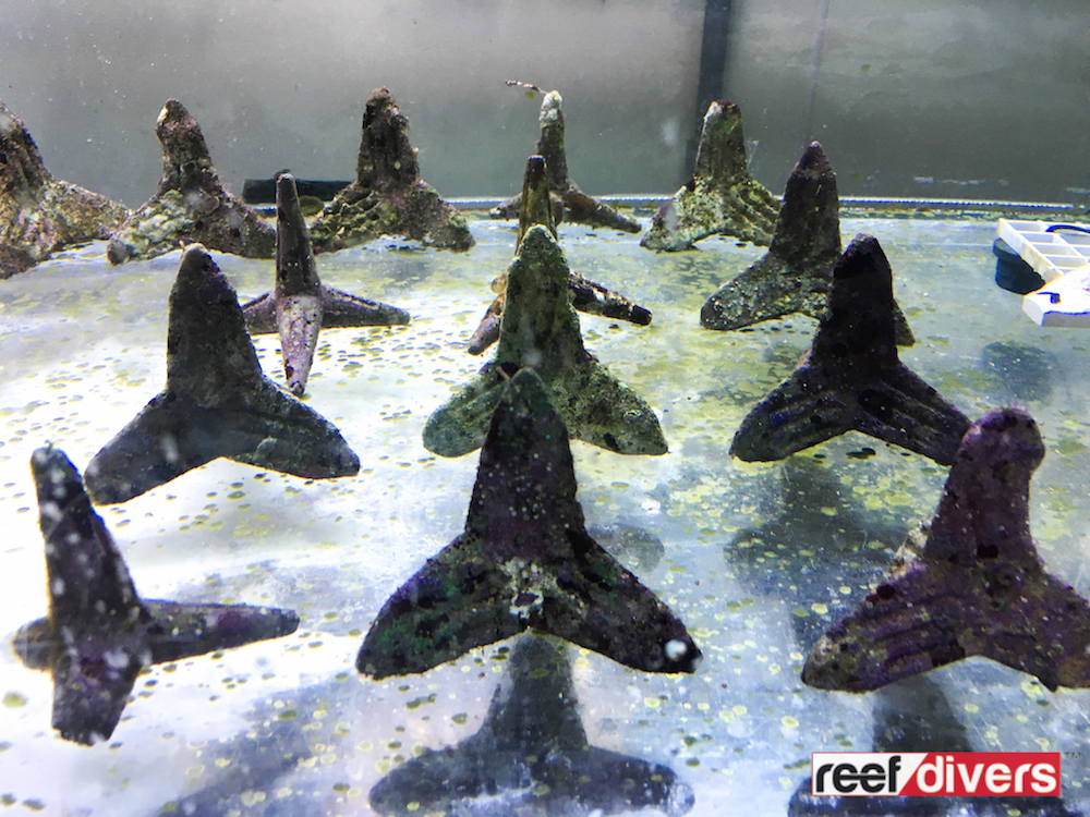 Coral Resotration