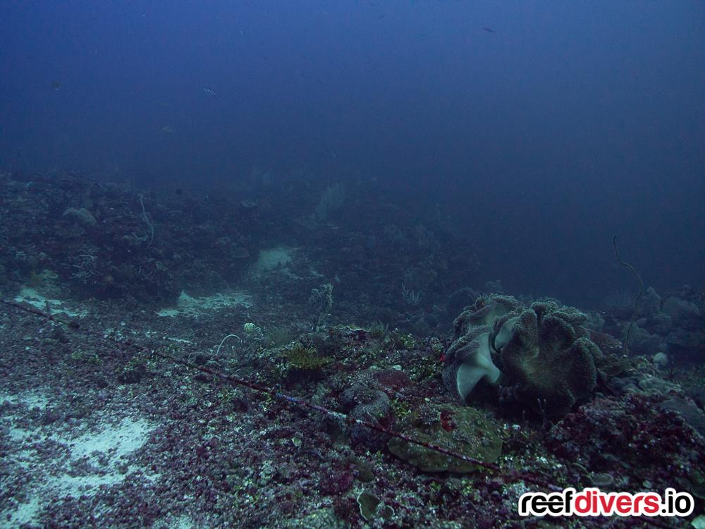 Thresher Shark Diving Malapascua