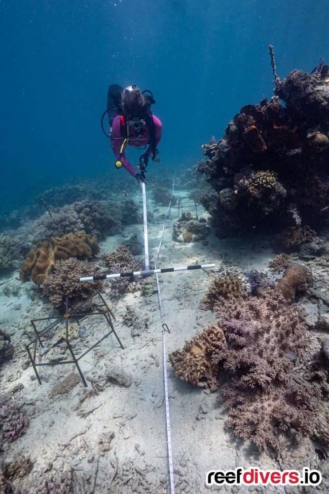 Coral Restoration Bangka Island